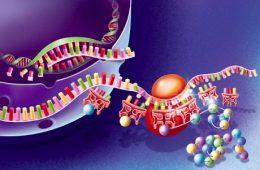 La proteina ripara ferite