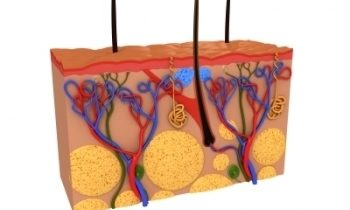 SIAscopy: rendiamo trasparente la pelle!