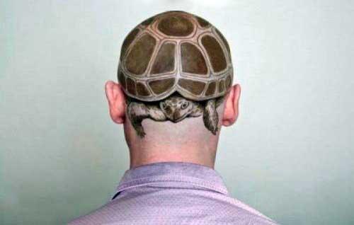 testa-tartaruga